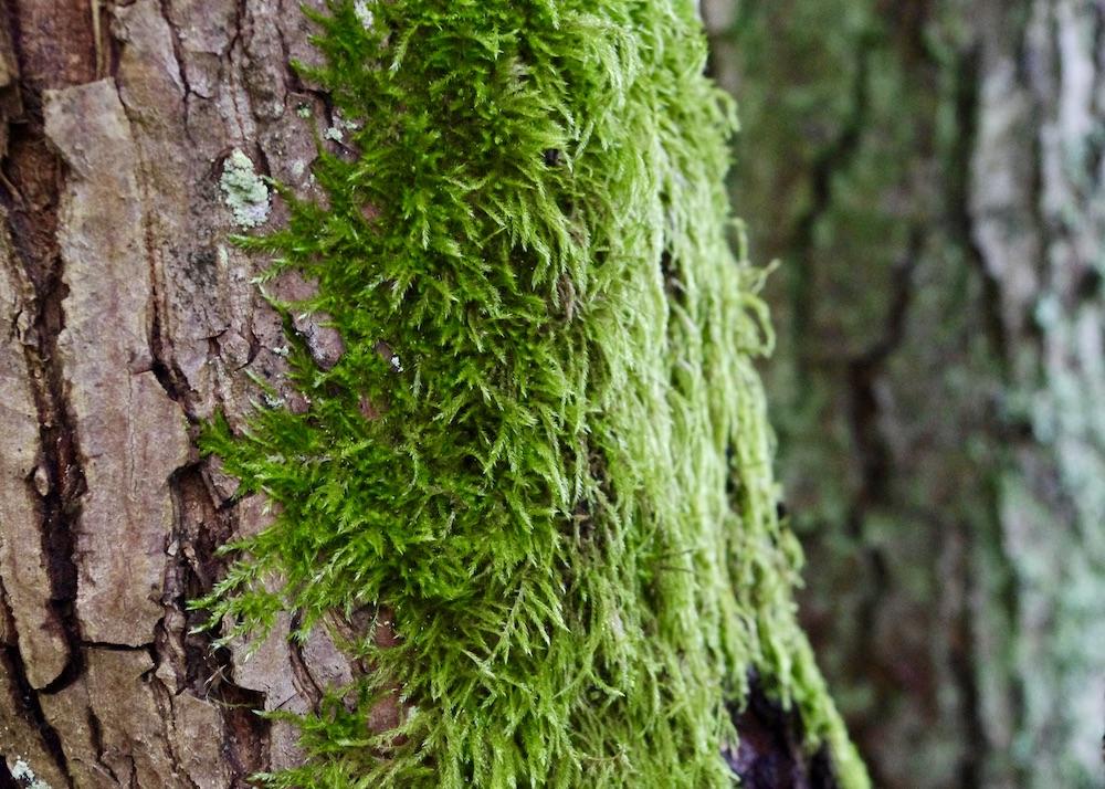 En trädstam