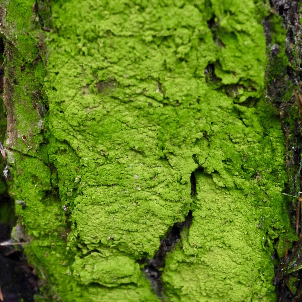 Som grön färg...