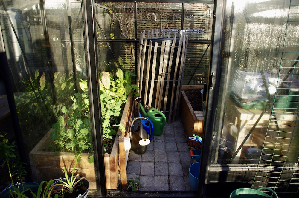 Just nu i mitt växthus (november 2020)